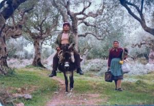STASINOS-GEORGIA   OLIVE GROVES